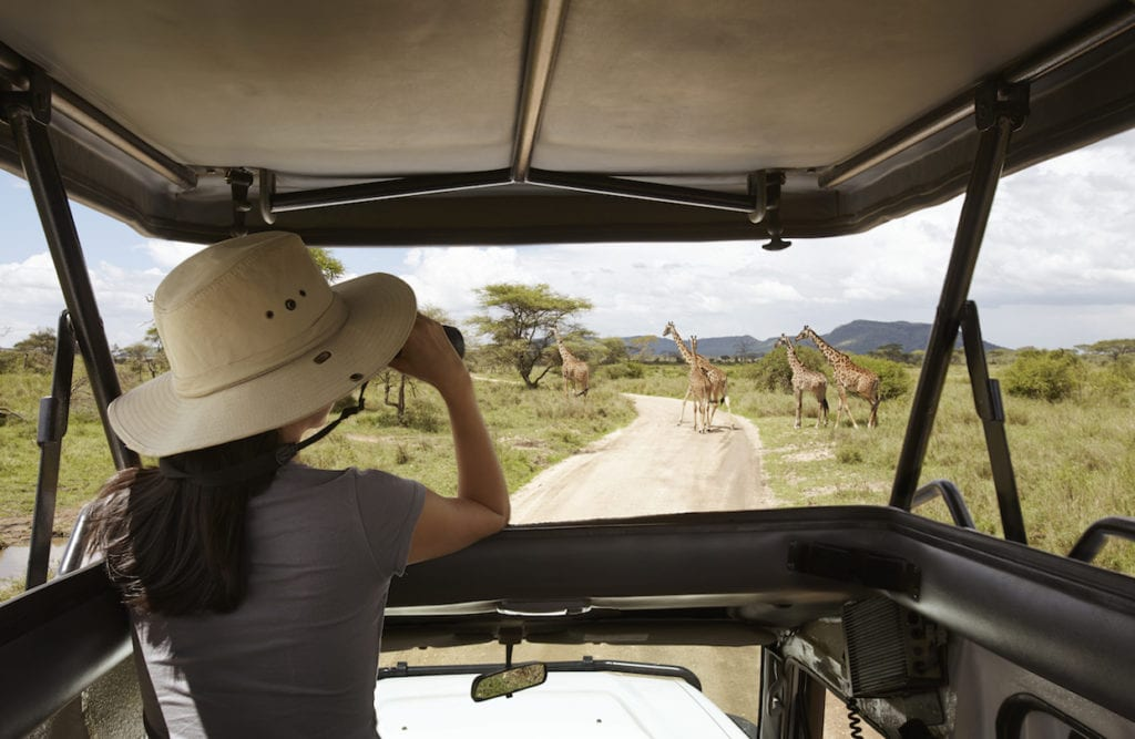Taking in the stunning sights of giraffes on a 4x4 safari game drive in the Serengeti National Park