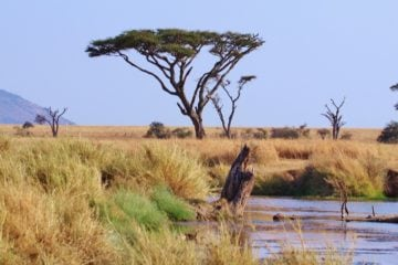 The amazing views of the Serengeti National Park in Tanzania
