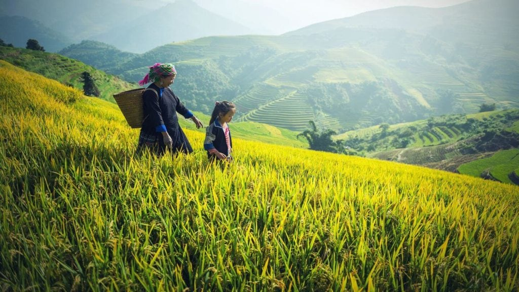 farmer and her child in lush green rice fields Vietnam