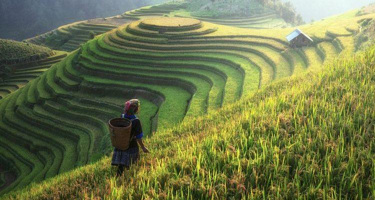 emerald rice terraces farmer asia