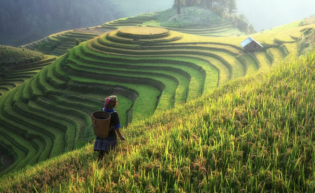 emerald rice terraces farmer asia movies set in asia movies about asia