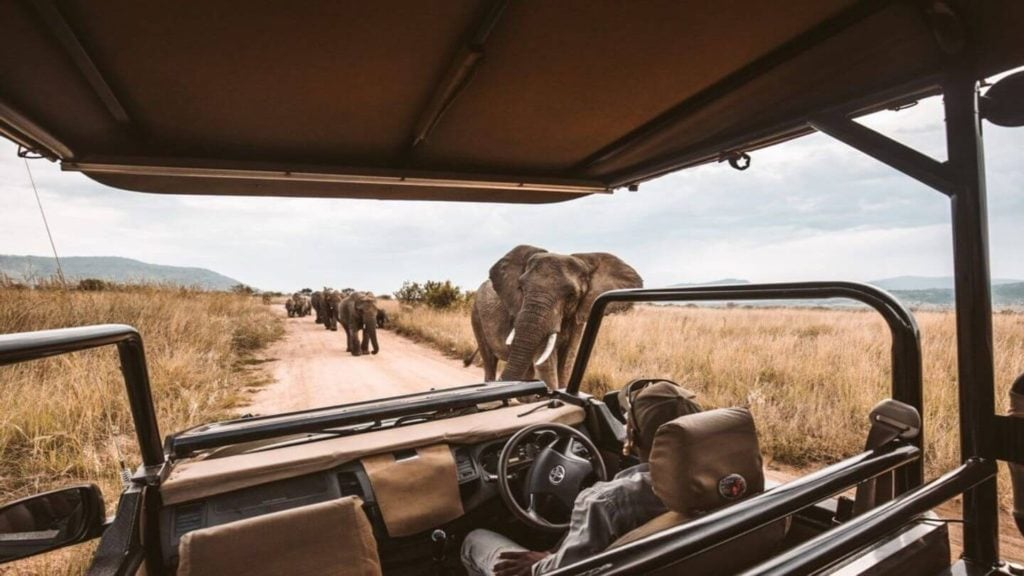 safari jeep watching a herd of elephants pass by Africa