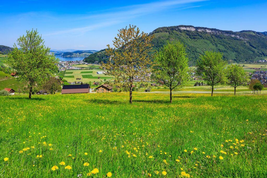 wildflower meadow Mount Stanserhorn Lake Lucerne Switzerland