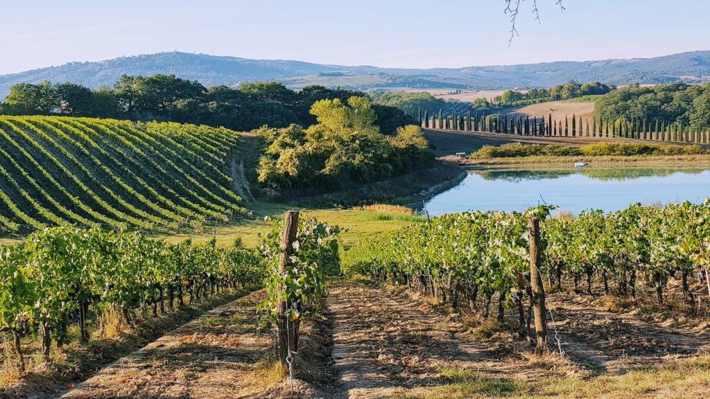 Tuscany wine hills