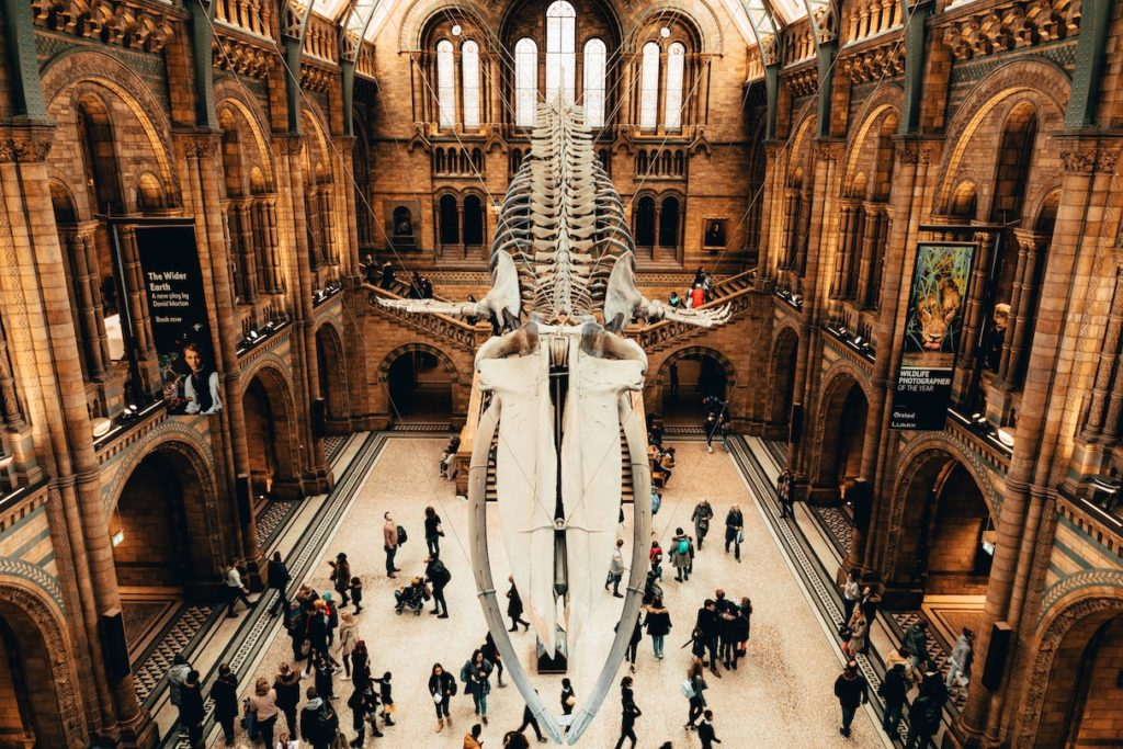 Natural History Museum, Exhibition Road, London