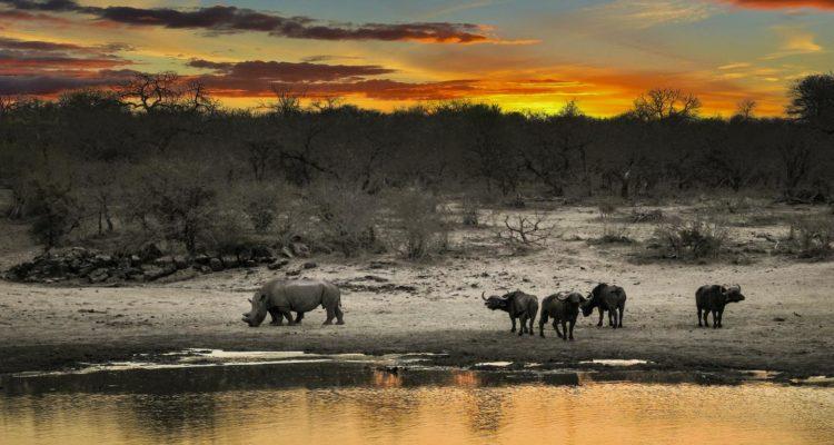 wildlife-sunset-african-safaris