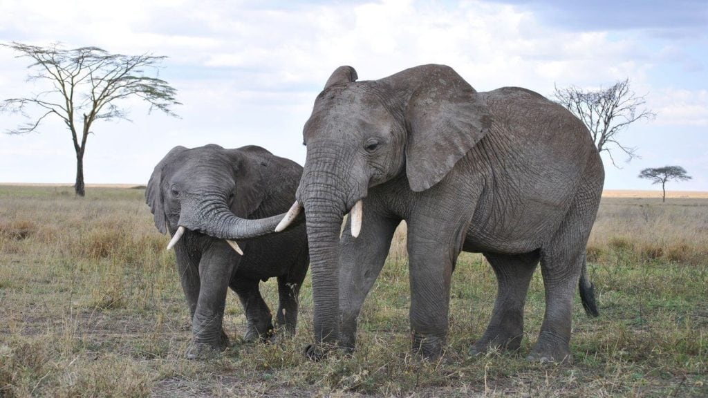 elephant with her baby in Africa