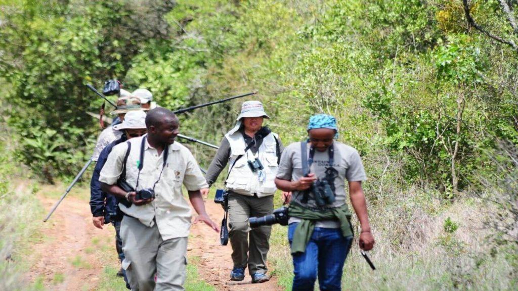 Safari guide with travellers walking through the bush