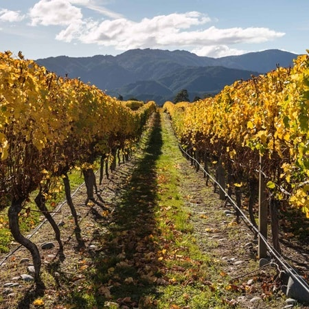 NewZealand Marlborough Vineyard Autumn 2016 R 533240812