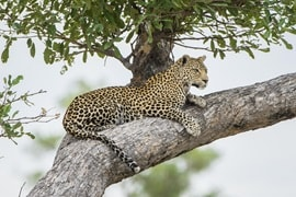 Botswana Chobe National Park 949686878