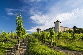 Bordeaux Vinyards, France
