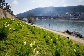 Heidelberg and River Neckar, Germany
