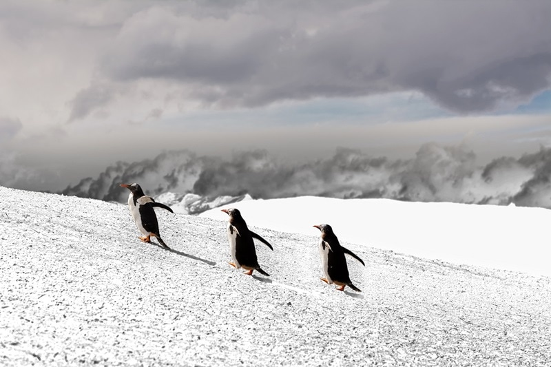Antarctica Peninsula Cruise Land of Penguins and Icebergs 763233671